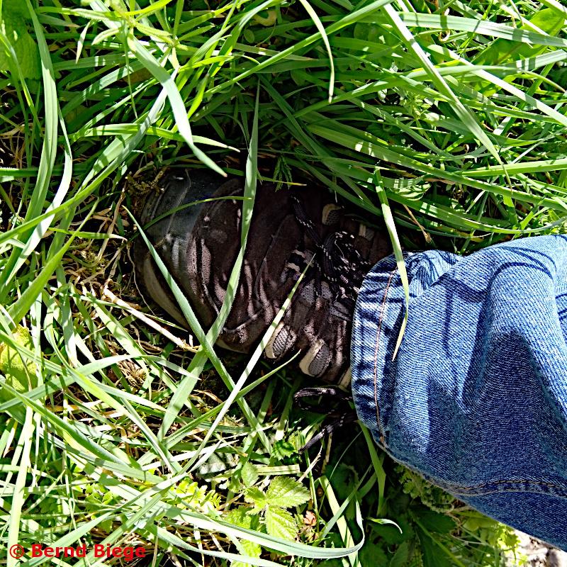 falscher tritt in das hungrige gras in irland